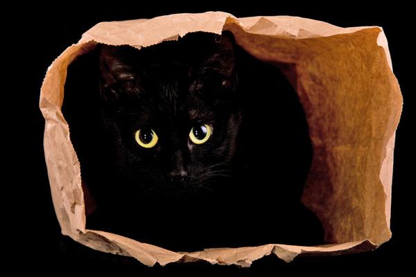 """Картинки по запросу """"фото кота в мешке"""""""